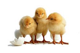 Norma ISO 17025 para asegurar la calidad de los controles de sanidad animal
